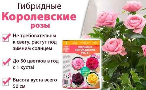 Свойства настоящих гибридных роз